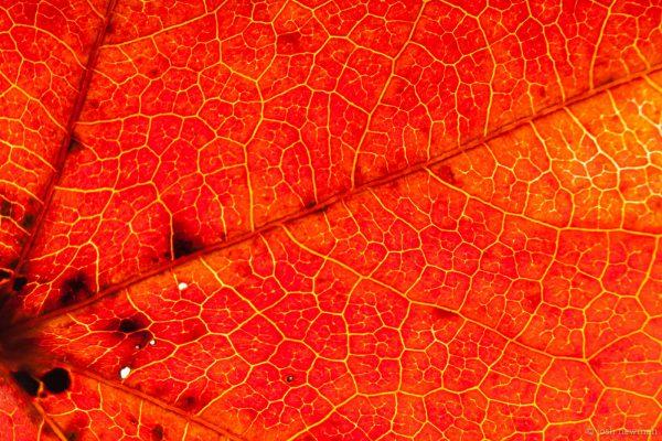 Leaves 1600-10