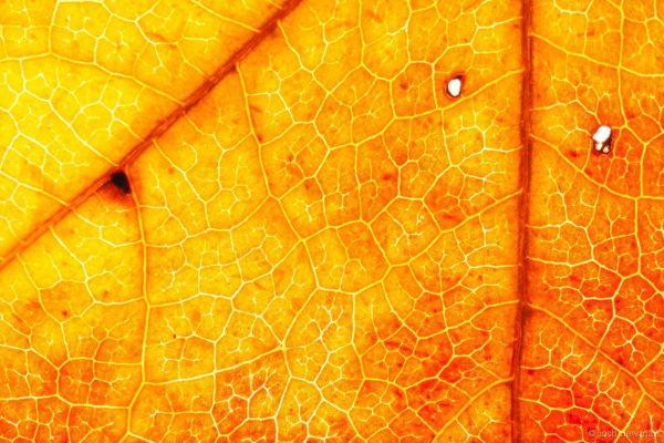 Leaves 1600-5