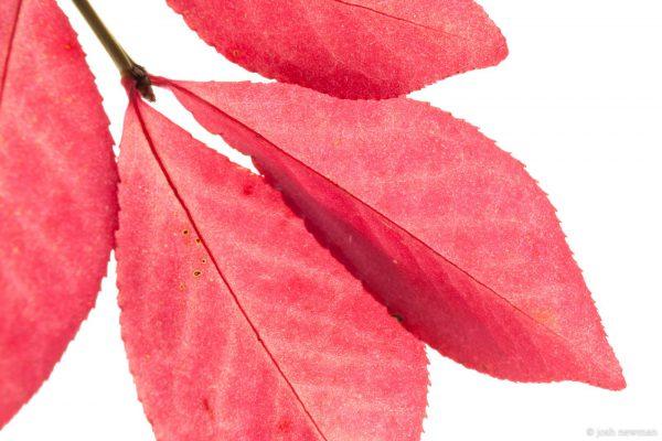 Leaves 1600-8